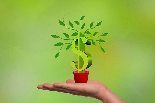 investissement -main avec une plante dollar en pot