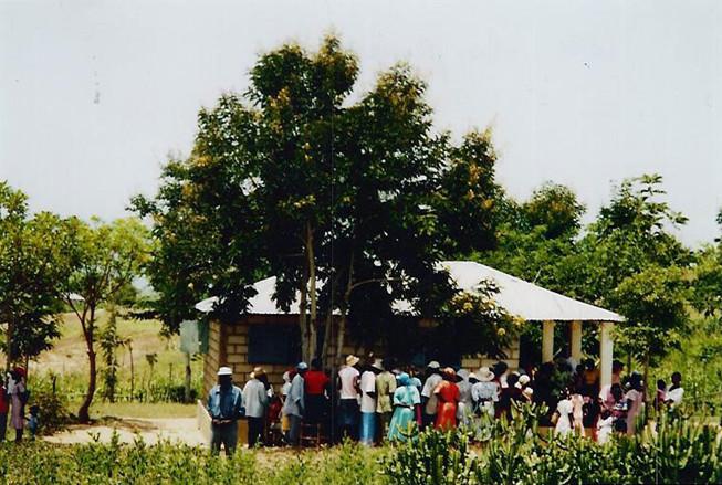 Haiti Cosmos