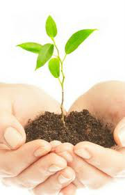 Juralégumes photo hands holding seedling in dirt. Home delivery services